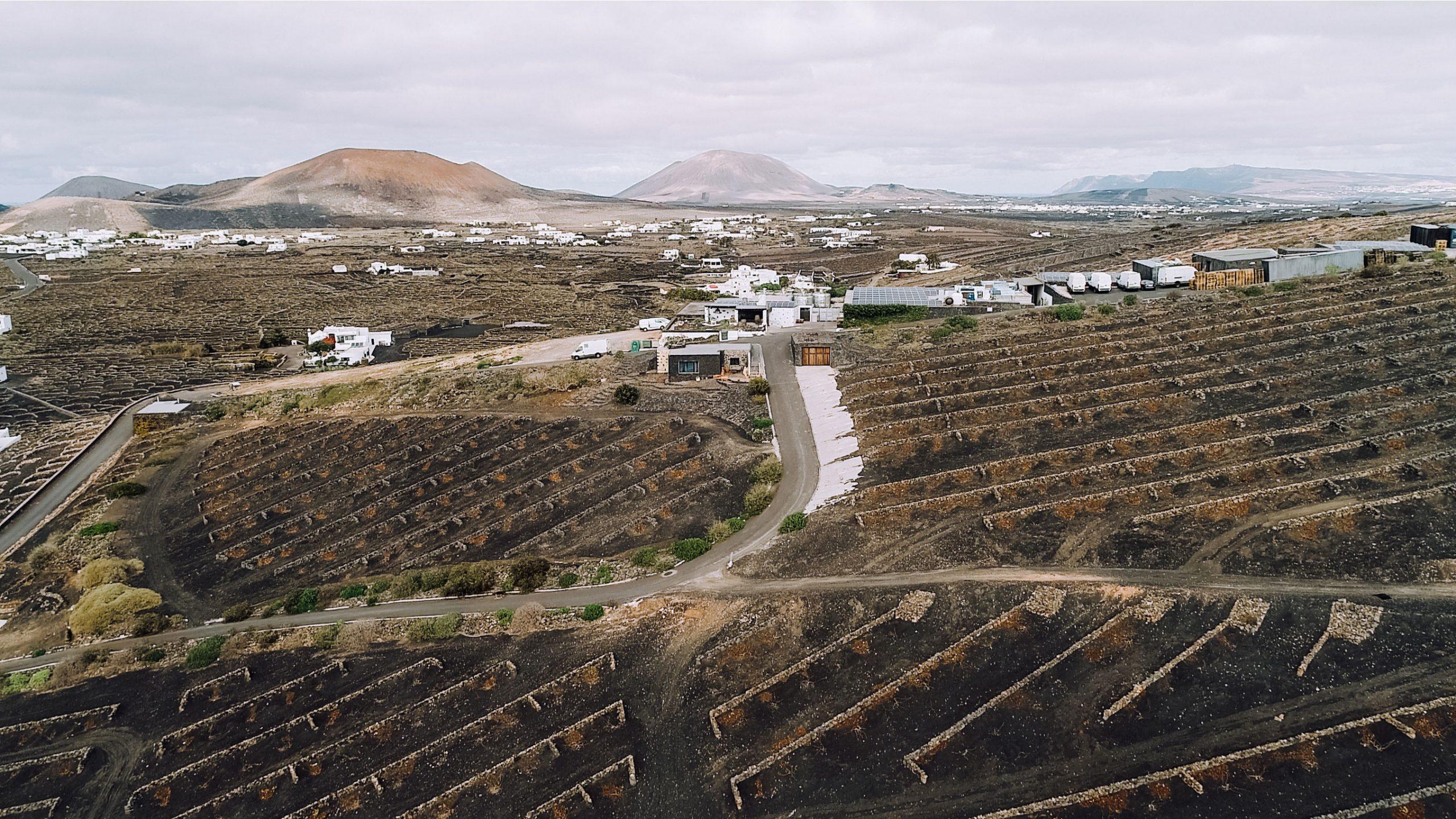 Vegadeyuco.com Winery and vineyards in La Geria
