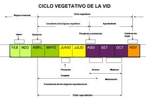 Ciclo Vid